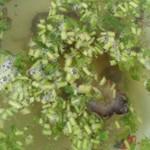 雨涵9681海参汤的做法