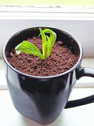盆栽椰奶冻的做法