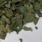 柿叶茶(茶叶本身)