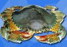 海蟹(小)