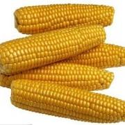玉米(黄,干)